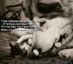 У вас прекрасный влащ И теплый ласковый яЩ И я так рад, что к вам пр Меня тот^йЙЯЙЙНЙЕ Создай свою котоматрицу .Hajkotomatrix.ru