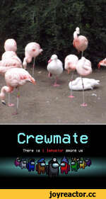 Crewmate There -is 1 Impostor атопэ us