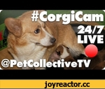#CorgiCam @PetCollectiveTV #Subs4Pets,Animals,,The Pet Collective will donate 25 cents in our month-long #Subs4Pets campaign for every net subscriber gained from September 24 to October 24, 2012 toward animal rescue - Full details here: http://bit.ly/subs4pets  Please take a moment to subscribe so