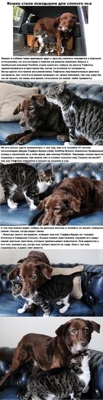 Кошка стала поводырем для слепого пса Кошки и собаки чаще враждуют друг с другом, нежели находятся в хороших отношениях, но эта история о совсем уж редком явлении. Кошка с необычной кличкой Pwditat стала помогать собаке по имени Тефтель ориентироваться в пространстве, когда та ослепла от катаракты