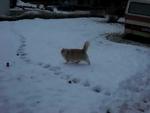 cat catches snowballs 3 / кот ловит снежки 3 / katt,Animals,,cat catches snowballs 3 / котэ ловит снежки 3 / katt