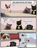Итак, джентльмены. Нам нужны новые идеи для кошачьих мемов! Напуганные коты! Клёвые коты! I Милые собачки?| -