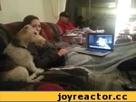 Собака общается через Скайп \ Dog talking on Skype,Animals,,Теперь и животные стали активно использовать новые технологи для общения. Вот например на видео видно как две собачки делятся новостями за день через Skype. Думаю производителям компьютерной периферии в недалеком будущем стоит задуматься