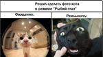 """Решил сделать фото кота в режиме """"Рыбий глаз"""" Ожидание Реальность: Я"""