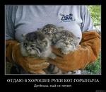 ОТДАЮ В ХОРОШИЕ РУКИ КОТ-ГОРЫНЫЧА Детёныш, ещё не летает. demotlvatlon.ru