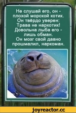 Не слушай его, он -плохой морской котик Он твёрдо уверен: Трава не наркотик! Довольна лыба его -лишь обман. Он мозг свой давно прошмалил, наркоман