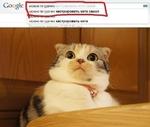 Со1)§1е можно ли удачно .можно пи удачно кастрировать кота самой можно пи удачно кастрировать кота Результатов: примерно 19 500 (0.65 сек.)