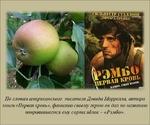 По словам американского писателя Дэеида Моррелла, автора книги «Первая кровь», фамилию своему герою он дач по названию понравившегося ему сорта яблок - «Рэмбо».