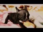 Пёс нападает на девушку Angry dog attack on girl,Animals,,