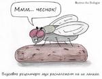 Biologist Вкусовые рецепторы мух расположены на их лапках,