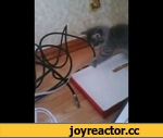 Kitten chewing on wires,Animals,,Spock's blog  http://spock-cat.blogspot.com/