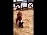 Реакция собаки на лимон / Dog's Reaction to a lime,Animals,,Очень забавное и необычное поведение собаки ) Hilarious puppy reaction to a lime