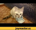 Кот украл деньги и не отдает / Cat stole the money and does not give,Animals,,