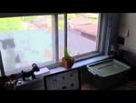 Злой кот за окном Angry cat outside the window,Animals,,