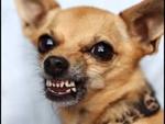 Мысли маленькой злой собаки(анимация),Film,,Британским учёным удалось расшифровать о чём думают маленькие собачки, которые лают на всех, кто мимо них проходит.