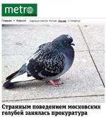 Главная > Новости Мировые новости Россия Москва С.Петербург Странным поведением московских голубей занялась прокуратура