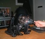 собака в костюме дарта вейдера