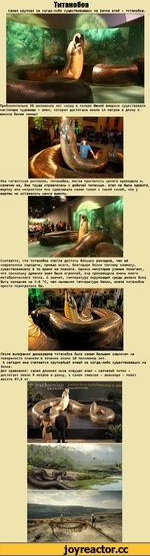 Титанобоа Самая крупная из когда-либо существовавших на Земле змей - титанобоа. Приблизительно 58 миллионов лет назад в сельве Южной Америки существовало настоящее чудовище - змея, которая достигала около 14 метров в длину и весила более тонны! Эта гигантская рептилия, титанобоа, могла проглотит